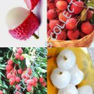 Lychee fruit 5 Seeds
