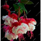 Bag Fuchsia Potted Flowers 50 Seeds