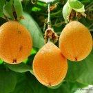 SWEET GRANADILLA 10 Seeds