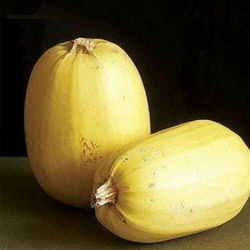 Spaguetii squash rare Pumpkin 20 Seeds