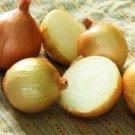ONION Texas Early Grano onios100 Seeds