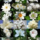 WHITE FLOWER PLANTS MIX 15 Seeds