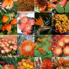 ORANGE FLOWER PLANTS MIX 15 Seeds