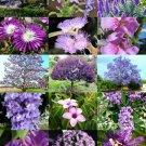 PURPLE FLOWER PLANTS MIX 15 Seeds