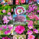 PINK FLOWER PLANTS MIX 15 Seeds