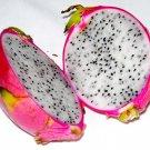 Dragon fruit pitaya 4 Pot
