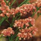 Statice (Limonium Sinuatum)- Apricot -50 Seeds