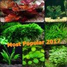 Live Aquarium Plant Set The Most Popular 2017 Freshwater Java moss Anubias More!