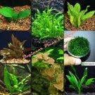 30+ Stem Live Aquarium Plants Bundle Package 8 Species Beginner Pack Freshwater
