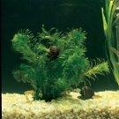 Anacharis Elodea Densa x9 Bundle Pack Live Aquarium Plant Freshwater Pond Koi