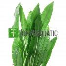 Echinodorus Amazonicus Bundle Tropical Freshwater Aquarium Live Plant Decoration