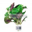 Lobelia Cardinalis Bundle Tropical Freshwater Aquarium Live Plant Decoration