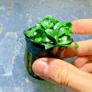 Anubias Nana Petite Pot Fish Tank Plants Aquarium Plant