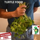 pennywort stems live plants Turtle Herp food Organic no chemicals