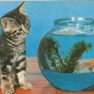 CURIOSITY - Tabby Kitten & Goldfish