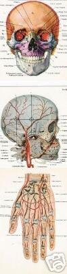 Set of 3 Postcards - Human Body