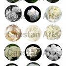 "White Roses 1"" Bottle Cap Images 4x6 Digital sheet only"