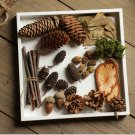 Photo props. Selection of acorn leaves and seeds for crafters.