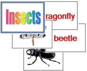Insect Flash Cards - (English)