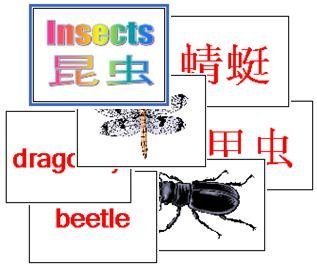 Insect Flash Cards 2-in-1 (Chinese & English)