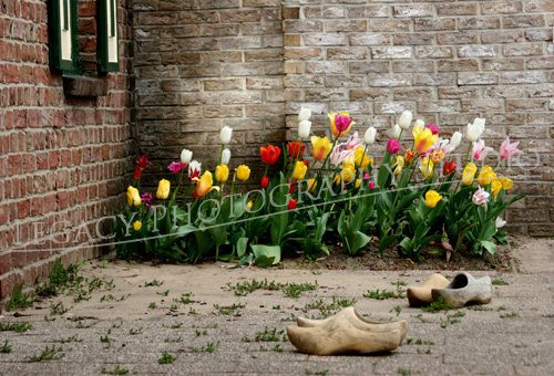 Tulips and Clogs
