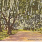 The Pakenham Oaks, New Orleans, LA postcard vintage
