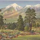 San Francisco Peaks, Flagstaff Arizona postcard  vintage