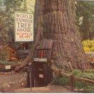 World Famous Tree House Laytonville vintage postcard