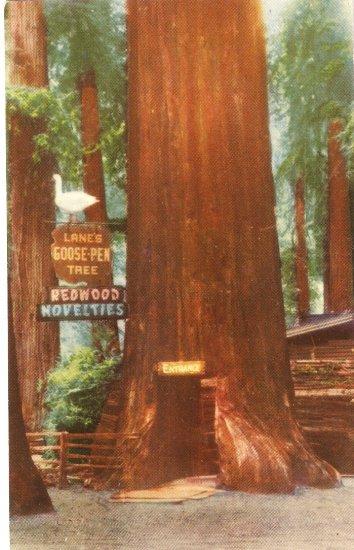 Lane's Goose Pen Tree Redwood Flat vintage postcard