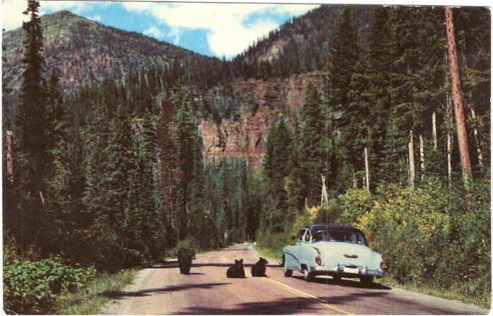 Bears McDonald Valley Glacier National Park postcard vintage