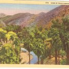 Palm Canyon California postcard vintage