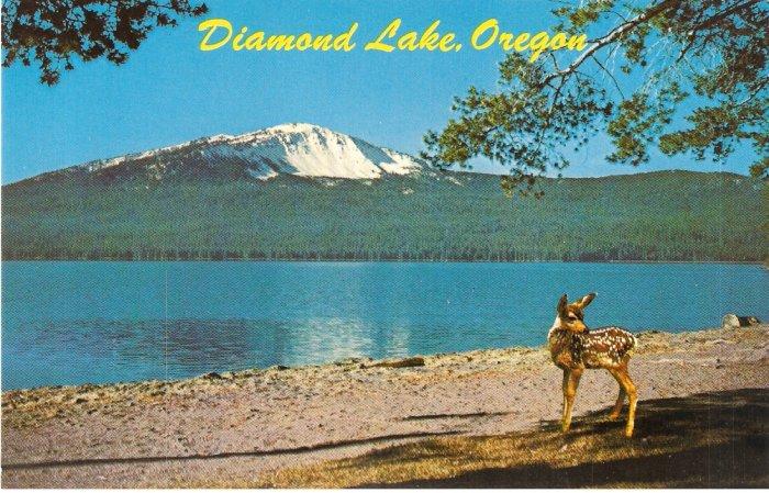 Diamond Lake Oregon vintage postcard