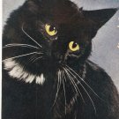 Sultan Cat Standard Arts vintage postcard