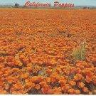 California Golden Poppies state flower vintage postcard
