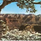 Grand Canyon National Park Arizona vintage postcard
