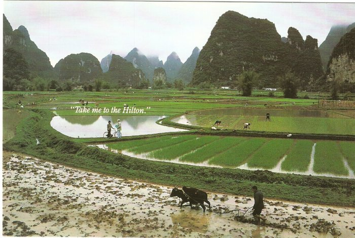 Take me to the Hilton Hotel postcard rice fields farmers