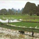 Take me to the Hilton Hotel postcard rice fields farmers