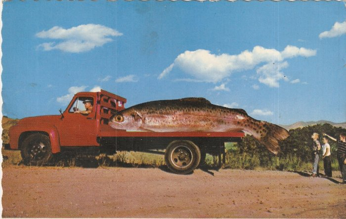 Saw a fair-sized trout vintage postcard giant fish red truck