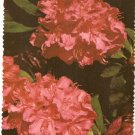 Evergreen State Washington Rhododendron flower vintage postcard