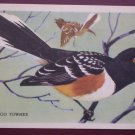 Gordon Bread Trade Card San Diego Towhee Bird Vintage