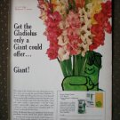 Gladiolus Green Giant Glads Vegetables Vintage Ad 1968