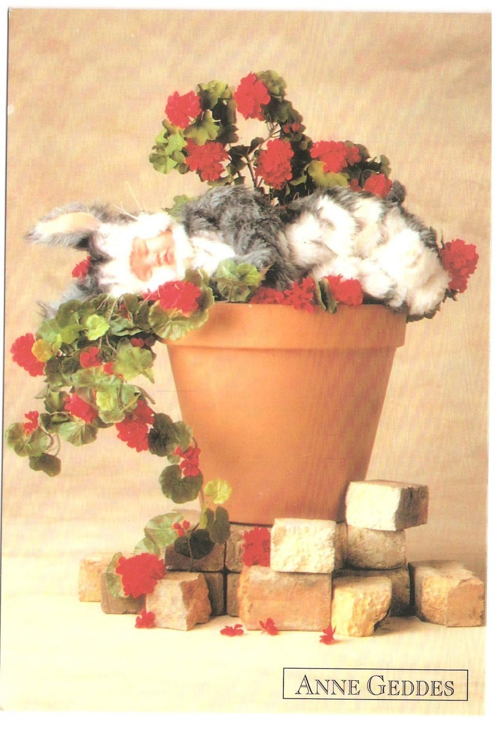 Anne Geddes Postcard 1995 Baby 605-022 Bunny Rabbit in Flower pot 4x6