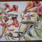 Ruby Throated Hummingbird Note Card Blank Trumpet Vine Al Dornisch