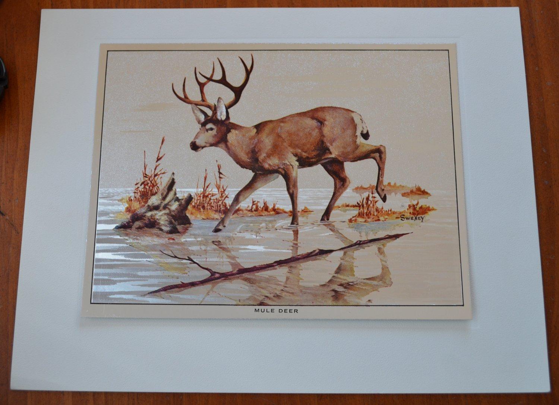Fred Sweney Mule Deer Foil Print Vintage Animal
