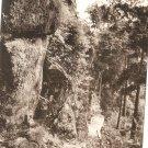 Vintage Postcard Japan Forest Path Woods Forest