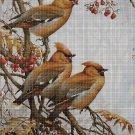 Birds on the branch 2 DMC cross stitch pattern in pdf DMC