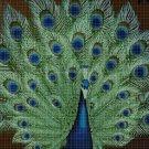 Peacock DMC cross stitch pattern in pdf DMC