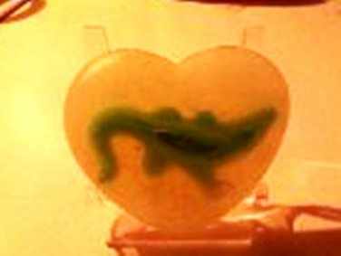 Go Gator in your soap - set of two HEART Soaps with a gator inside!