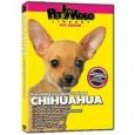 Everything You Should Know Chihuahua Pet Dvd