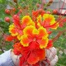 Caesalpinia Pulcherrima Shrub / Tree, Great For smaller Yards 100 Seeds